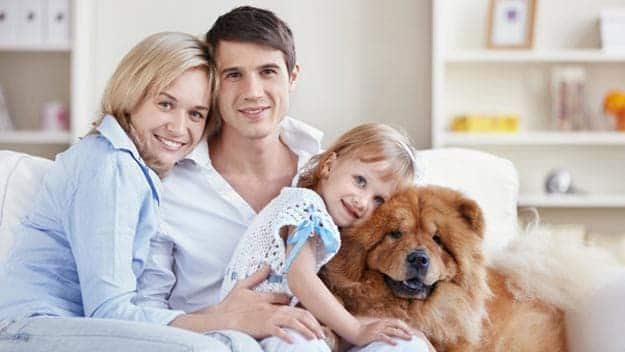 Wills & Trusts dog-young-family Direct Wills Devon